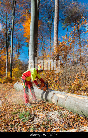 Lumberjack with chain saw during forest works - Stock Photo