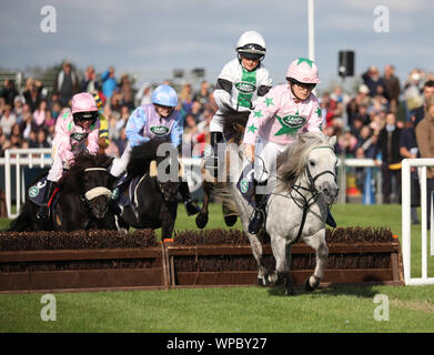 The Shetland Pony Grand National gets underway at The Land Rover Burghley Horse Trials, Stamford, Lincolnshire, on September 7, 2019. - Stock Photo