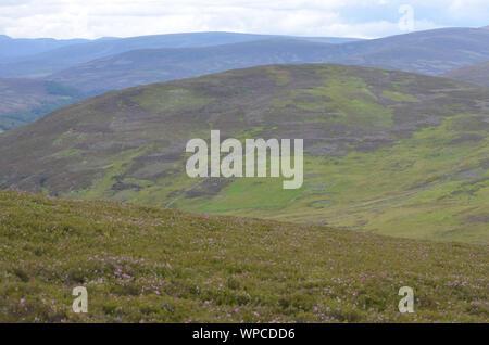 Moorland along the Sgor Buidhe trek near Ballater, Cairngorm mountains, Scotland - Stock Photo
