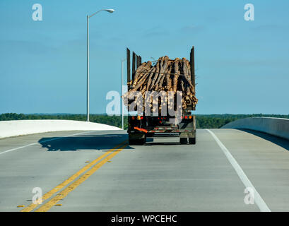Rear view of logging truck traveling over a rise hauling cut pine tree poles in Florida on US Highway 98, near Apalachicola, FL, USA - Stock Photo