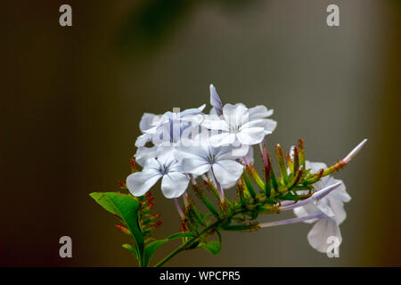 MILKY WHITE FLOWERS - Stock Photo