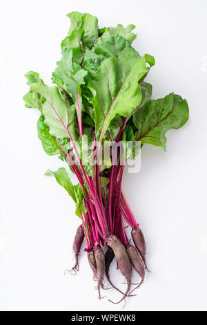 Young beetroot green tops on white background - Stock Photo