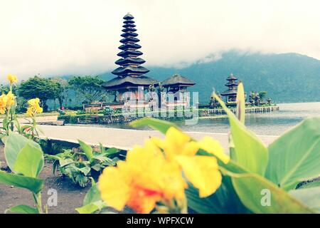 Flowering Plants In Front Of Pura Ulun Danu Temple By Lake During Foggy Weather - Stock Photo
