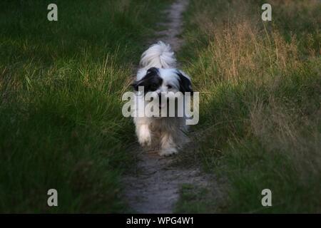 Dog Walking On Narrow Path - Stock Photo