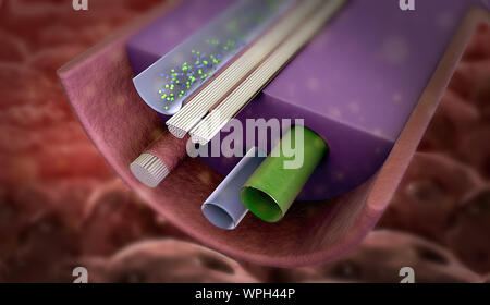 hormone produced by gland, Active nerve cell in human neural system, Neuron Impulses, gland produce hormone - Stock Photo