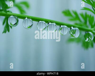 Close-up Of Water Drops With Reflection Hanging On Plant Stem - Stock Photo
