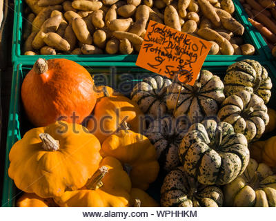 Various pumpkins and squash are sold on the markets in France in autumn. Their names, Jack be Little, Potimarron and Sweet Dumpling are often amusing. - Stock Photo