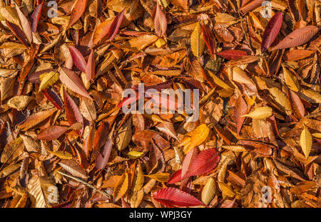 Autumn leaves carpet and foliage background - Stock Photo