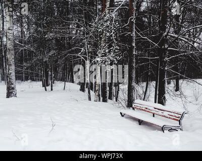 Empty Bench By Bare Trees On Snow Covered Field - Stock Photo