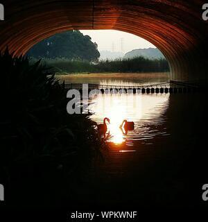Silhouette Swans Swimming On Lake Below Arch Bridge - Stock Photo