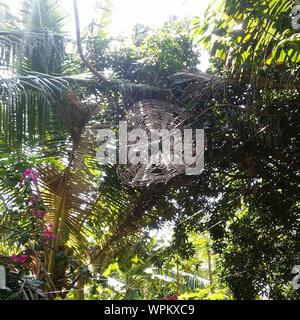 Low Angle View Of Spider Web Against Trees In Backyard - Stock Photo