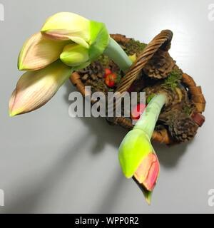 Close-up Of Amaryllis Against White Background - Stock Photo