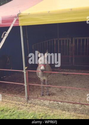 Portrait Of A Donkey In Barn - Stock Photo