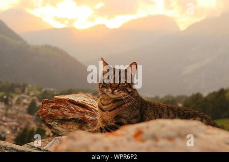 Portrait Of Cat Sitting Against Mountains During Sunset - Stock Photo