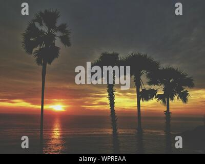 Silhouette Palm Trees In Front Of Sea During Sunset - Stock Photo
