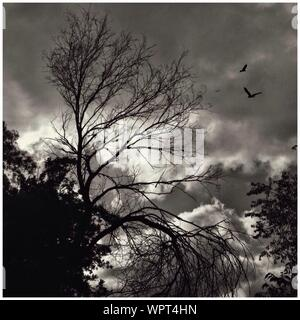Black And White Image Of Tree Tops Against Sky - Stock Photo