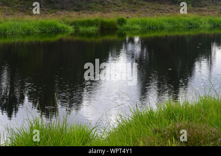 A small pond in Sgor Buidhe circuit trek near Ballater, Cairngorms, Scotland - Stock Photo