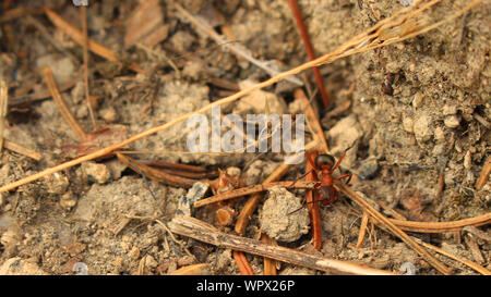 High Angle View Of Ant On Ground
