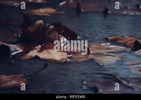 Detail Shot Of Dry Leaves In Water - Stock Photo