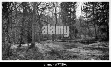 Trees Growing Around Pond In Forest - Stock Photo
