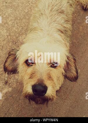 Fluffy Dog Looking At Camera - Stock Photo