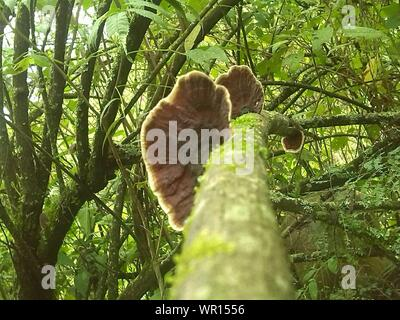 Low Angle View Of Mushrooms Growing On Mossy Tree In Forest - Stock Photo