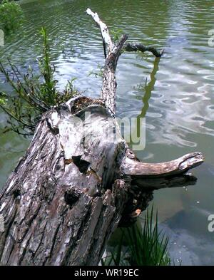 High Angle View Of Fallen Tree Trunk Over Lake - Stock Photo