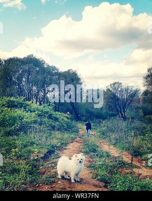 Dog Standing On Dirt Road With Man Walking In Background - Stock Photo