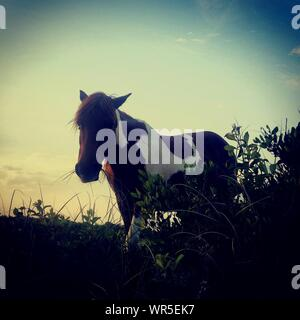Low Angle View Of Horse Grazing On Grassy Field Against Sky During Sunset - Stock Photo