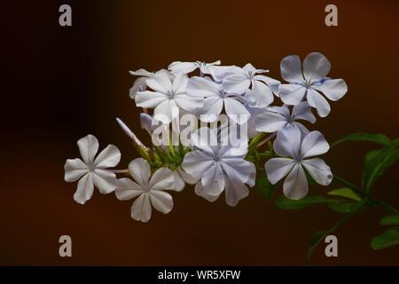 MILKY WHITE GRANDEUR - Stock Photo