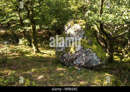 Huge stone - rock, partly covered by moss, among the trees in the forest. Fresh green color of the leaves and grass in the late summer. Modra, Little - Stock Photo