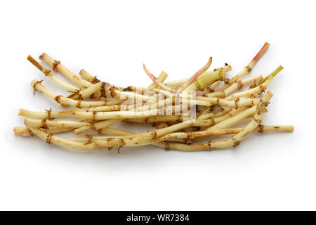 Fish mint root,  guizhou cuisine ingredient - Stock Photo