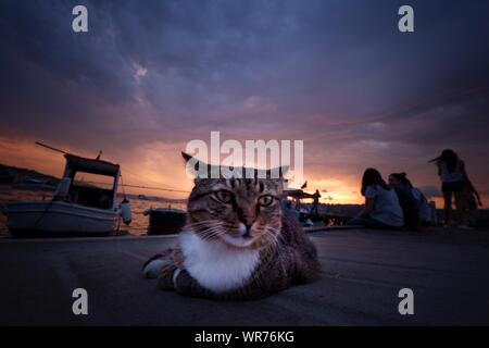 Portrait Of Cat Sitting Against Sky During Sunset - Stock Photo