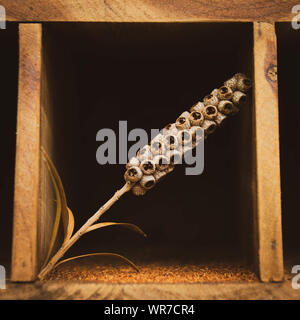 Dried flower or plant in a wooden display unit - Stock Photo