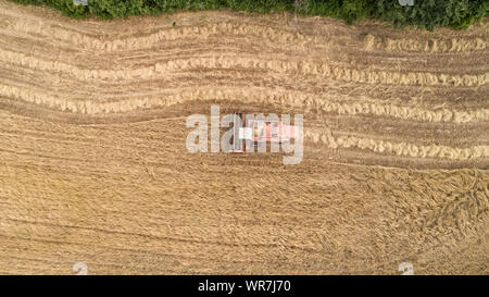 Thresher farming in golden wheat field. Aerial view of threshing machine working in Italy. - Stock Photo