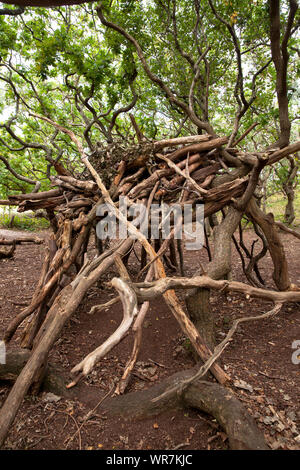 simple shelter built with tree trunks and branches in the nature reserve de Manteling near Domburg on Walcheren, Zeeland, Netherlands.  einfacher Unte - Stock Photo