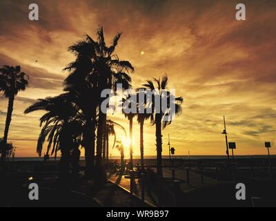 Silhouette Palm Trees In Front Of Sea Against Cloudy Sky At Sunset - Stock Photo