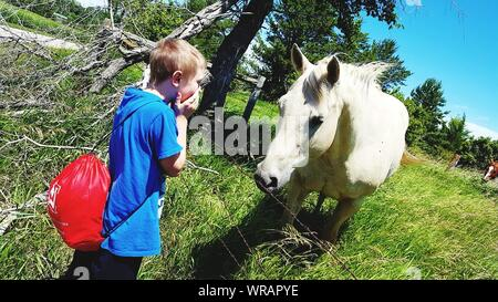 Side View Of Boy With Hands Covering Mouth Looking At Horse On Field - Stock Photo