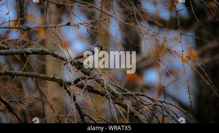 Close-up Of Dried Branches Against Blurred Background - Stock Photo