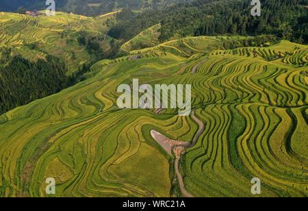 An aerial view of the Jiabang rice terraces in Congjiang County, Qiandongnan Miao and Dong Autonomous Prefecture, southwest China's Guizhou Province o - Stock Photo
