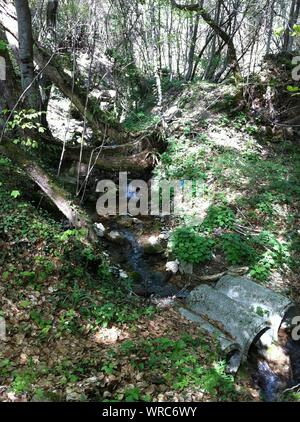Stream Flowing Through Forest - Stock Photo