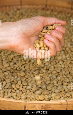 Green unroasted coffee beans on hand close up - Stock Photo