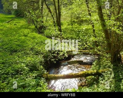 Small Stream Flowing Through Forest - Stock Photo