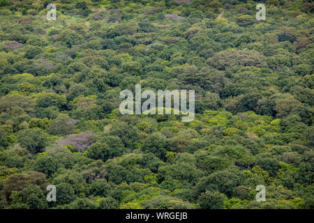 Aerial view of rain forest in Ethiopia. - Stock Photo