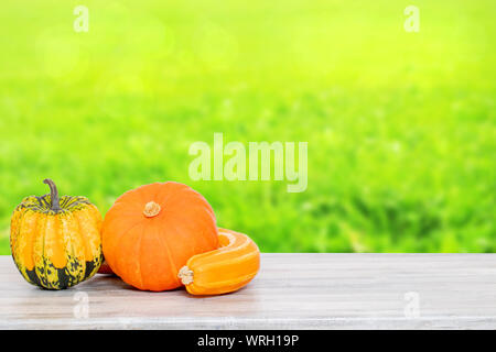 Pile of pumpkins. Close-up of a stack decorative colorful pumpkins on a bright wooden table against abstract blurred natural green yellow background. - Stock Photo