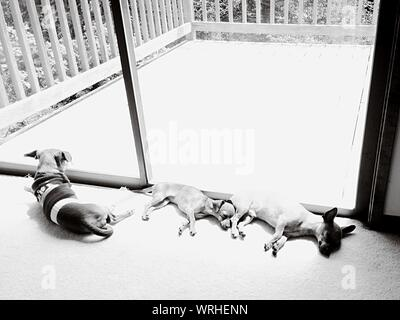 View Of Dogs Sleeping On Floor - Stock Photo