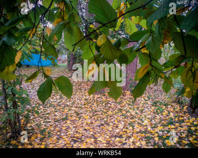 Background of colorful autumn leaves on forest floor . Abstract autumn leaves in autumn suitable as background . Autumn leaves on a meadow - Stock Photo