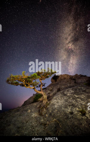 A lone tree on the rock with deep starry sky and Milky Way above it - Stock Photo