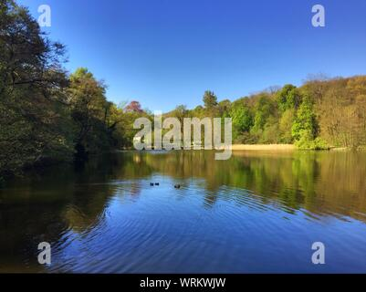 Trees And Blue Sky Reflecting In Small Lake - Stock Photo