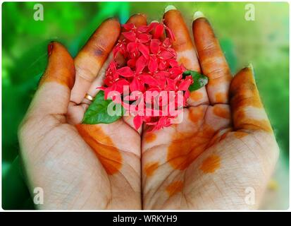 Cropped Image Of Female Hands With Henna Tattoo Holding Red Flowers - Stock Photo